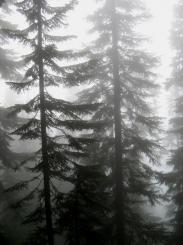 16-treesilhouette