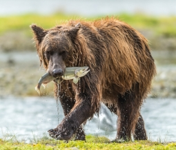 Kodiak Island Wildlife